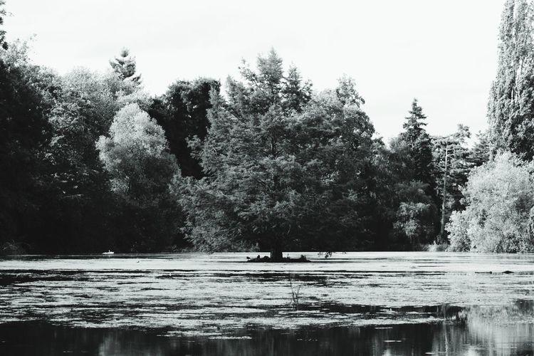Arbre Tree Arbre Au Milieu De L'eau Bois De Boulogne Gris Noiretblanc Blackandwhite Taking Photos Nature Photography