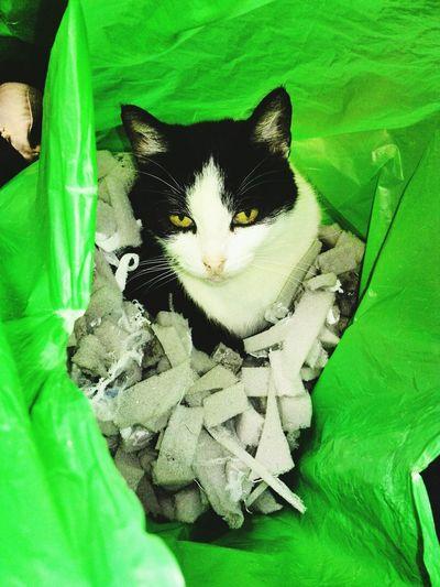 Tara<3Taking Photos Hi! EyeEmBestPics EyeEm Gallery Cat♡ Cat LoversCheck This Out Cats Of EyeEm Cats Cats 🐱 Catsofeyem Gatos Gato😽 Gatos 😍 Pet Portraits