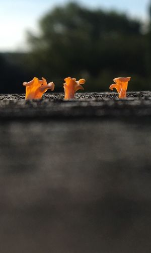 Micro Forest In A Row Beauty In Nature Beauty In Nature Close-up Fungus 🍄 Blacksburg