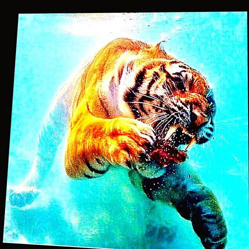 Tiger 😂