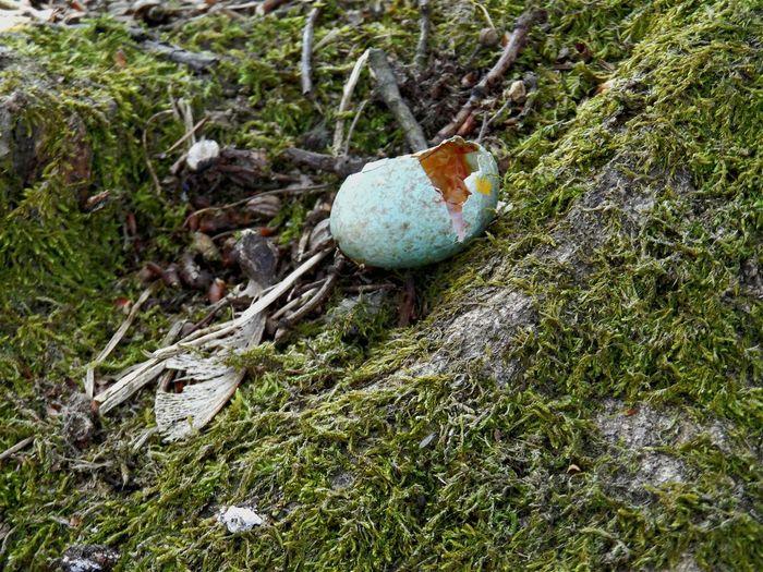 Taking Photos Springtime Eggs Bird Eggs Taking Photos New Life & New Hope