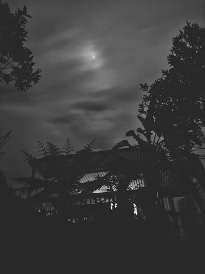 Night Tree Silhouette Star - Space Moon Nature Scenics Beauty In Nature Sky Outdoors Astronomy No People Huawei G9 Mobilephotography Darkness And Light Light And Shadow Backyard Black And White Friday