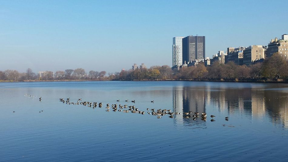 Lake Water Urban Skyline Lake In Central Park Central Park Central Park Reservoir Jacqueline Kennedy Reservoir Tranquility Peaceful Moment Peace And Quiet Calm Still Water Reflection