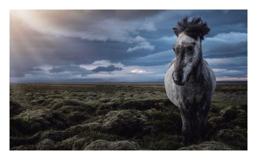 Wild horse in