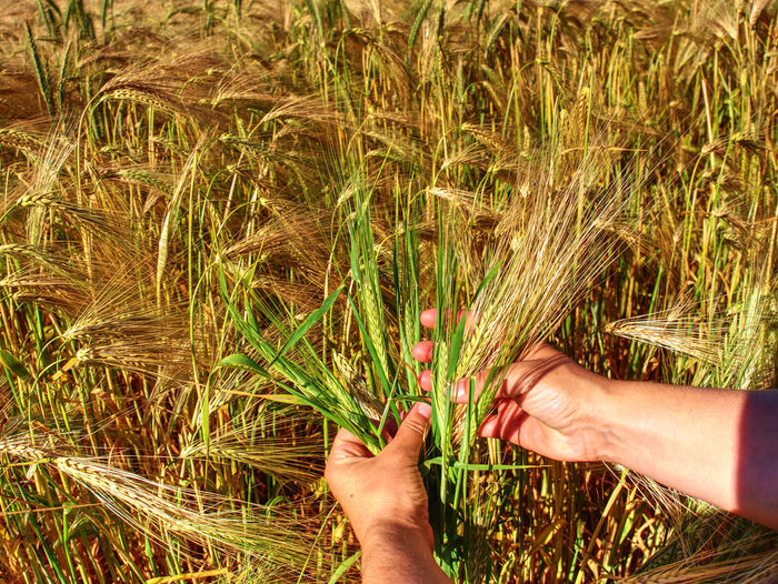 Cropped image of hand touching grass