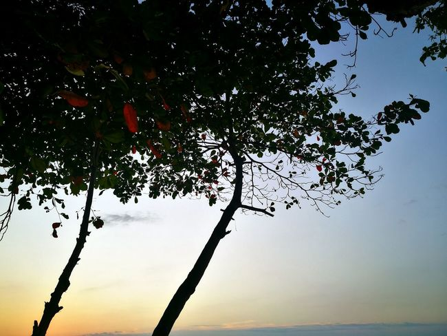 Nature Tree No People Outdoors Beauty In Nature Sunset Tranquility Costa Rica Costa Rica❤ Sea Life Branch Low Angle View Sky Tranquility Day