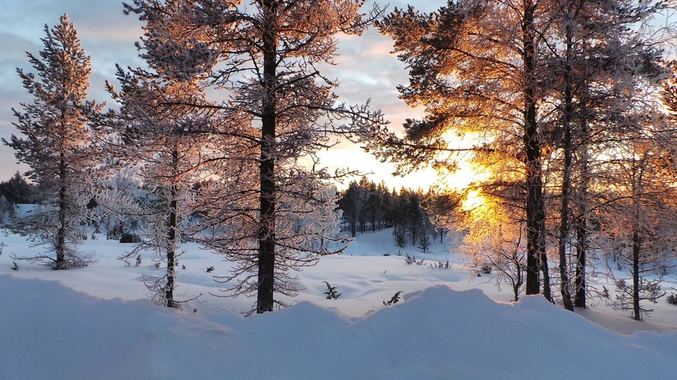 Reflection Tree Nature No People Cold Temperature Sunset Sky Outdoors Beauty In Nature Water Close-up Snowing Snow Nature Winter Lapland, Finland Lapland Finlandia Saariselkå Lapponia Travel Destinations Finland Beauty In Nature Refraction Day