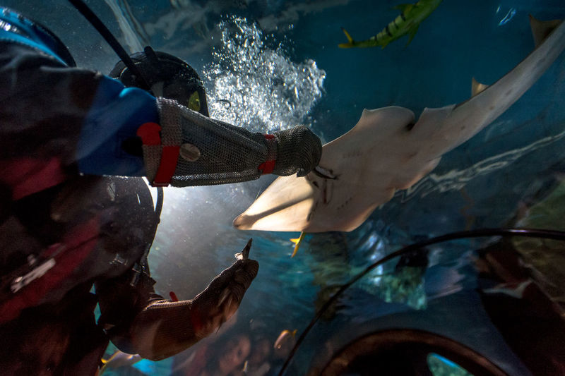 Aquarium Rio, Moscow, penguin, shark, people, children, birds, sea cat, monkey Animal Themes Animals In The Wild Art And Craft Broken Danger Destruction Dirty Fish High Angle View Human Body Part Human Leg Low Section One Person Sea Life Swimming Swimming Pool Underwater Water Wet Wildlife