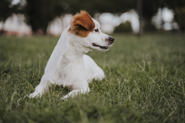 Dog on grass at park