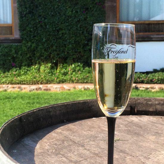 OpenEdit Mexico Luxury Wine Tasting Exploring Learning