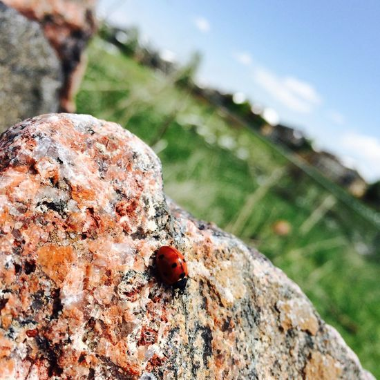 Colorado is just a beautiful place with lady bugs Nature Beauty