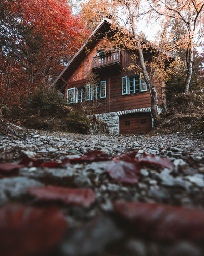 ↟ The cabin in the woods 🍁 My favorite colors are yellow and red, maybe that's why I love autumn so much 💛❤️ What's your favorite color/colors? Autumn colors Nature Cabin Cabin In The Woods Woods Residential Structure Human Settlement Residential Building House Country House