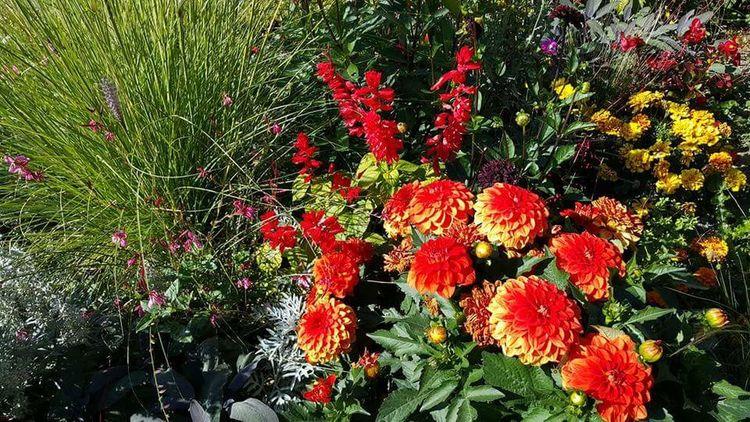 Jardin Des Invalides Flower Arangement Multi Colored Beautiful Flowers