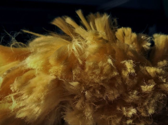Close-up No People Black Background Fuzzy Hairy  Fuzzy Soft Dusters