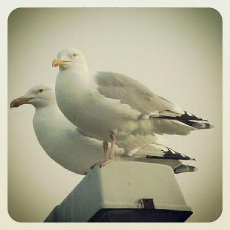 Möwe Seemöwe Vogel Bird seagull