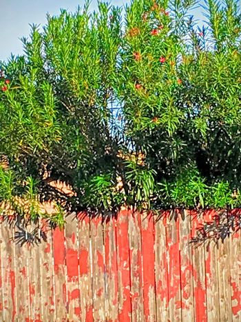 Rustic scenes in the neighborhood Tree Multi Colored Hanging Vibrant Color Streetphotography
