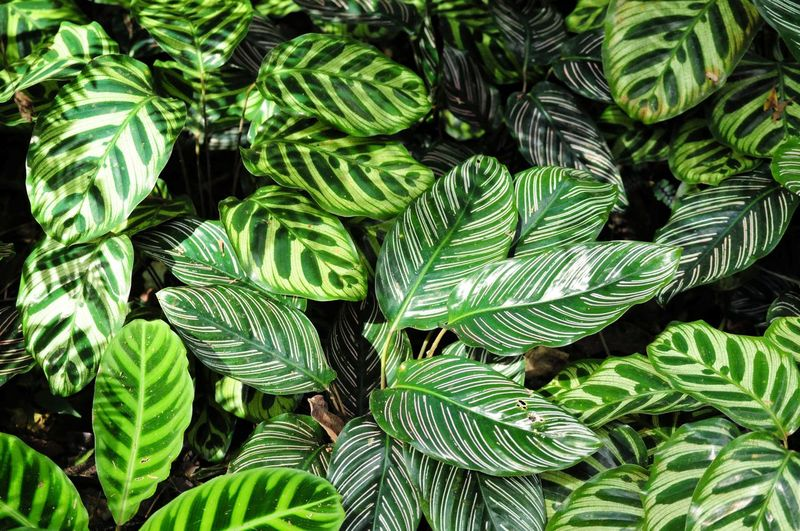 Nature patterns. Patterns In Nature Brazil Outdoors Jungle Green Leaves Garden Backgrounds Leaf Full Frame Close-up Plant Green Color Foliage Botanical Park Natural Pattern Plant Life