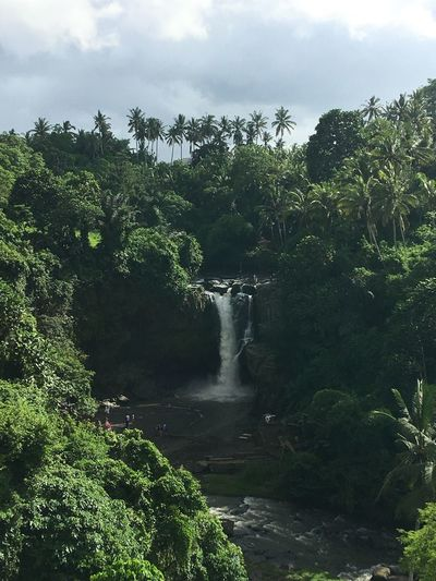Bali Ubud Tegenungan Waterfall View Breathtaking Scenic Picturesque Paradise Tranquil Scene Beauty In Nature Forest Hiking Water Nature Beauty In Nature Scenics