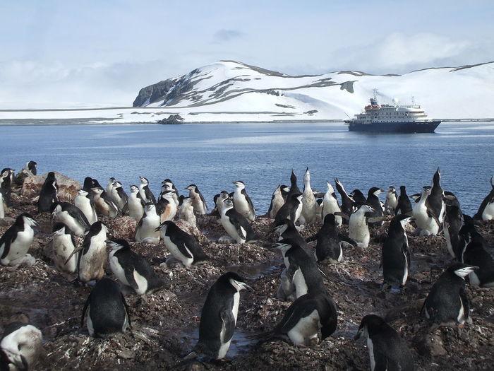 Antartica Penguins Cruiseship Cruise To The South