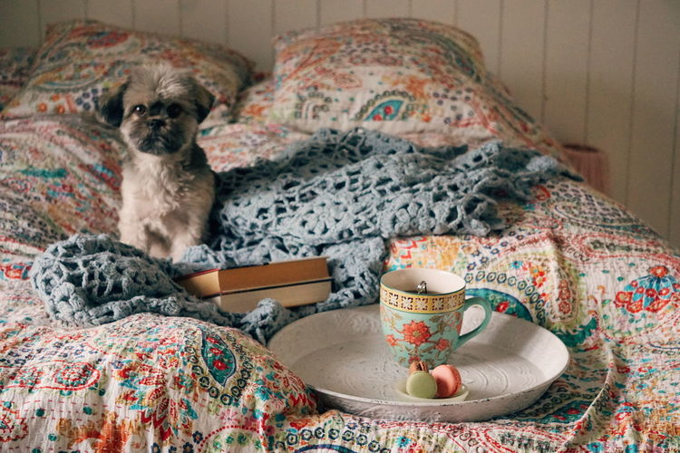 Portrait of dog with breakfast sitting on bed at home