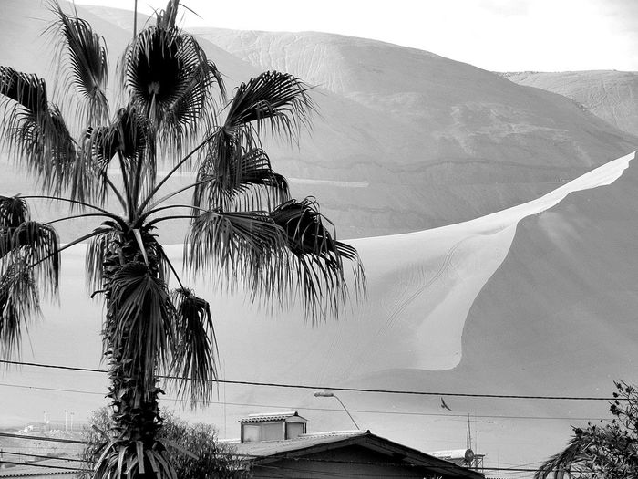 Tree Palm Tree Outdoors Nature Water Mountain Day Sea No People Beauty In Nature Sky Iquique Chile  Cerro Dragón