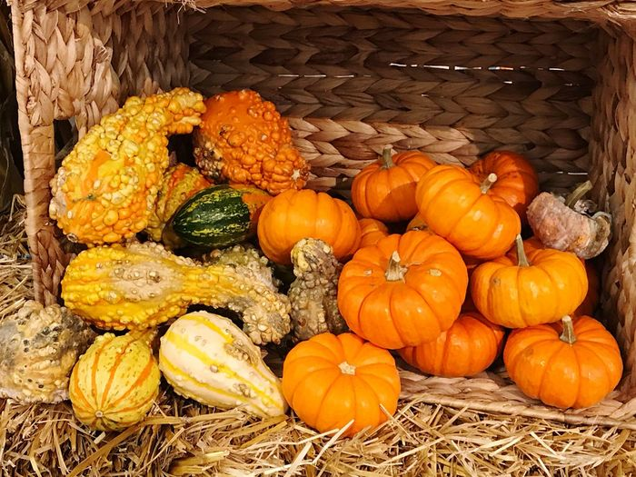 Fall Season Food And Drink Pumpkin Food Freshness Vegetable Wellbeing Healthy Eating Orange Color Large Group Of Objects No People High Angle View Still Life Day Abundance Plant Market Agriculture Choice Variation Nature