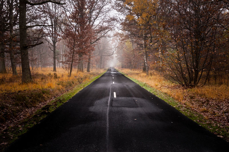 Empty Road Amidst Autumn Trees