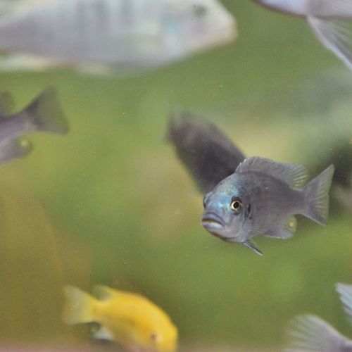 Underwater Photography Fish Waterlife Different Spicies Colorful Eyes On Camera Capture The Moment Habitat Harmony Exotic ExploreEverything