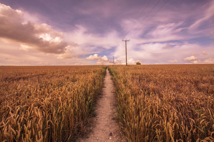 Narrow pathway along landscape