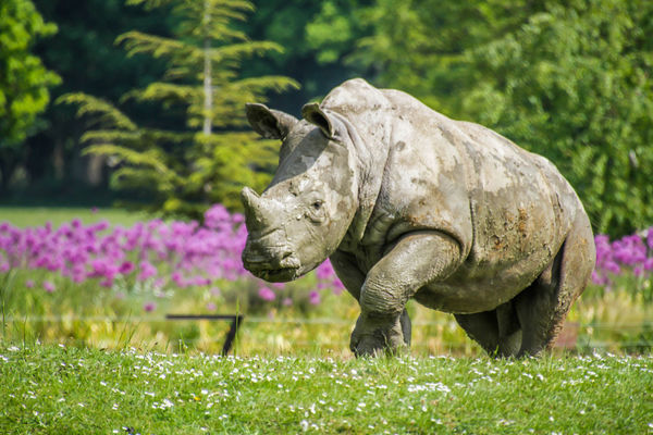 50+ Rhino Pictures HD | Download Authentic Images on EyeEm