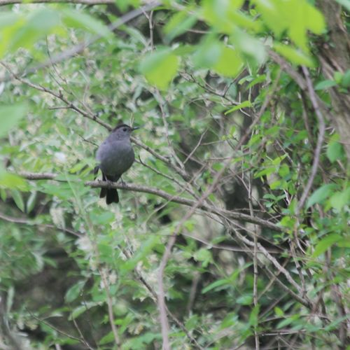 Canon EOS 60D Animal Wildlife One Animal Bird Perching