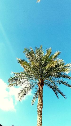 Green Palm Tree Abu Dhabi Azure Sky UAE Day Animals In The Wild Animal Wildlife Tree Palm Tree Beauty In Nature Outdoors Sky Close-up EyeEmNewHere