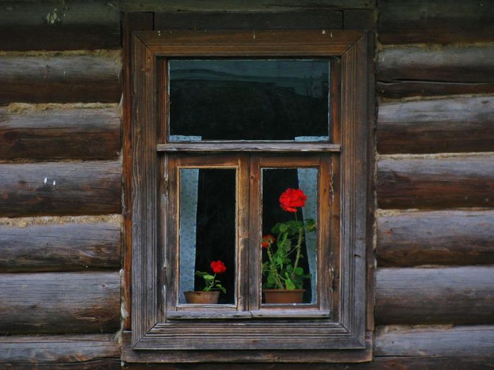 Window with flowers Closed Comfort Comfortable Cosiness Day Drapes  Flower Fragile Fragility Glass Harmony House Lares Life Mood No People Time Village Village Life Village View Waiting Window Wood Wood - Material Wooden