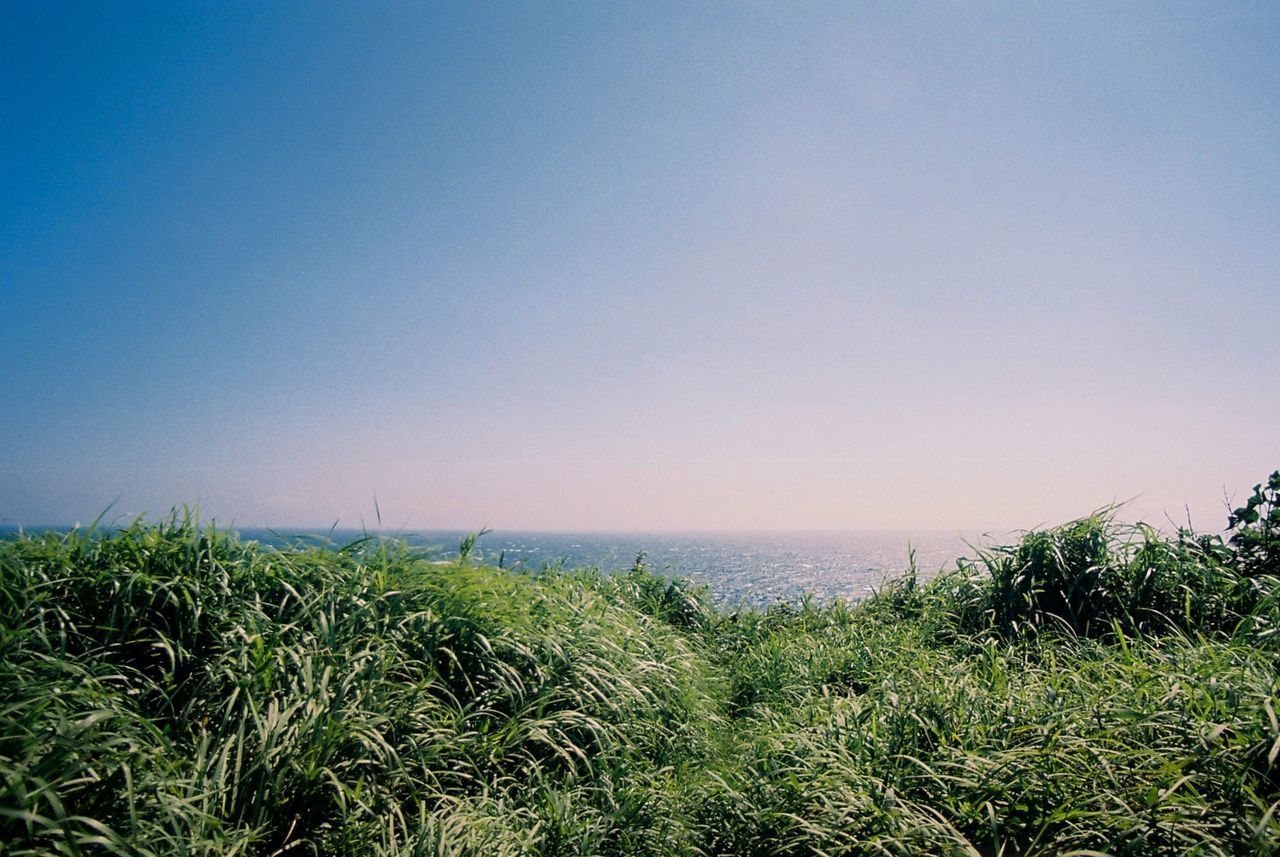 Grassy field against sea and clear sky