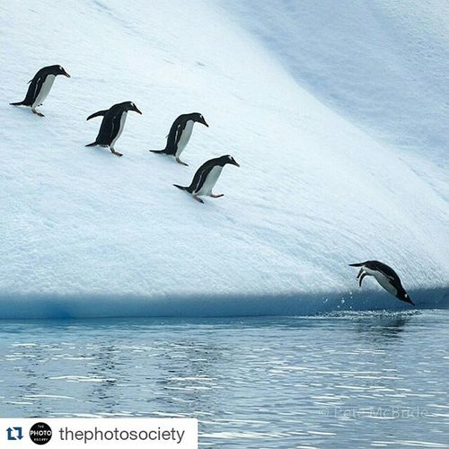 ADAMLARIM Repost @thephotosociety ・・・ Photo by Pete McBride @pedromcbride // To all the mother's that carry the worry, yet support and inspire us to take those giant leaps into the world -- like this young Gentoo  Penguin leaping into Antarctica's icy waters, shot Onassignment for @natgeo a few years ago. To see a human making a similar icy leap, go to @pedromcbride. Grahmaland Happymothersday Antarctica Unpublished @thephotosociety @natgeocreative