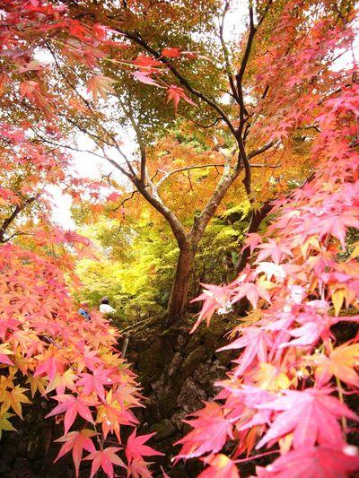 Trees Kyoto
