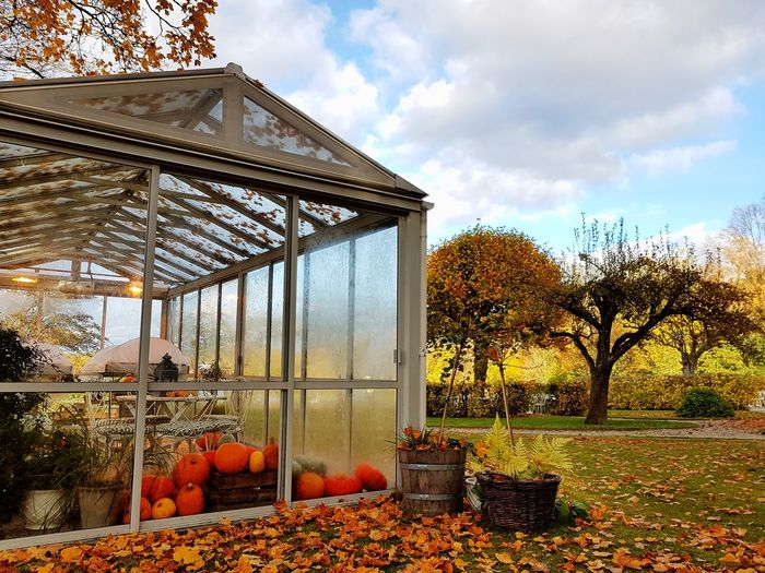 Autumn Helloween🎃🎃🎃 Pumpkins Stockholm Countryside Sweden Autumn Built Structure Cloud - Sky Day Grass Greenhouse Nature No People Outdoors Plant Sky Table Tree