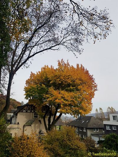 Big Yellow Tree