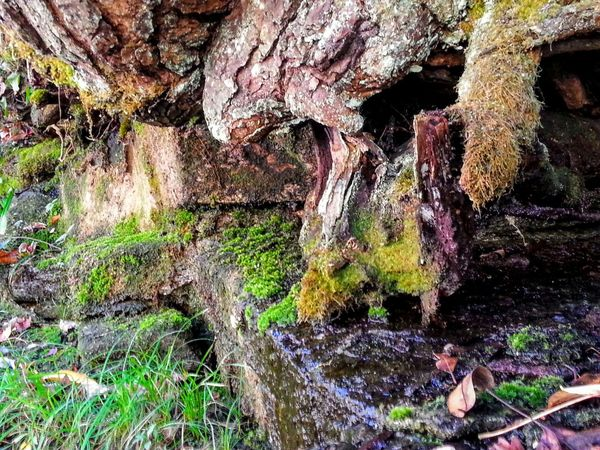 Showcase: November Moss & Lichen Outdoor Photography EyeEm Nature Lover My Point Of View Taking Photos Check This Out The Great Outdoors