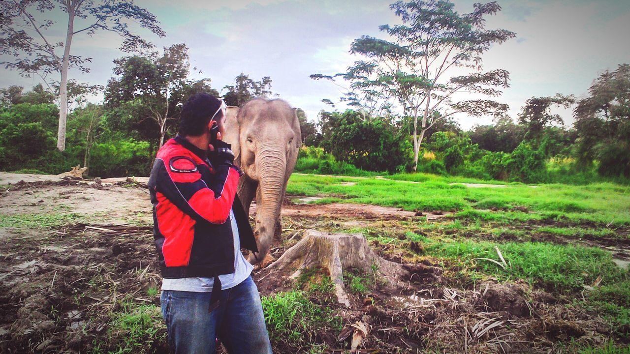 Hello... I'm online here !! Elephant Animal Animals Lover Taking Photo Nature EyeEm Indonesia The Moment - 2015 EyeEm Awards Balikpapan Mobile Photography