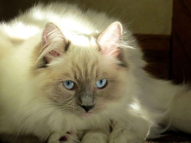 Creative Light And Shadow Cat Cats Of EyeEm Kitty Josie