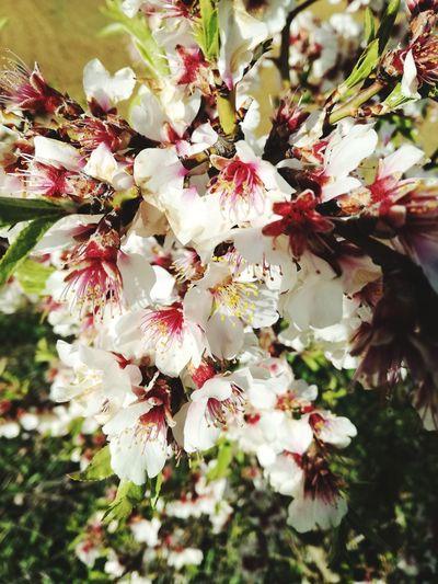 Springtime Flower Head Flower Tree Branch Springtime Blossom Stamen Botany Close-up Plant