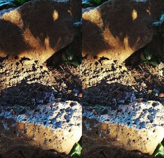 Morning Sunsplash Stereoscopic 3D Stereocrossed Nature The View From Here EyeEm Best Shots Gently cross your eyes until the left and right images merge.... and 90% of you will see depth in the image. My apologies to the other 10%. 2016 01 11