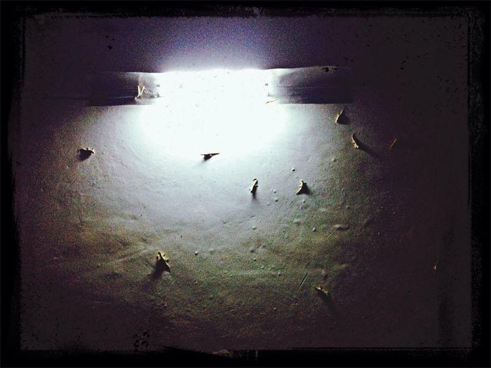 Lizard swarm When i look up am fear.