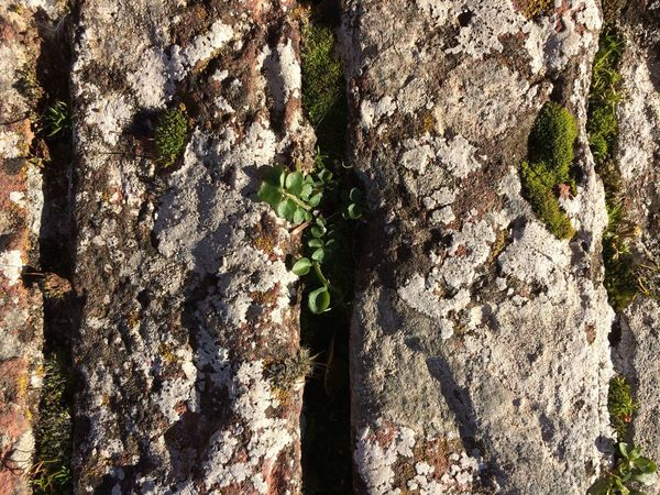 Textured  Life Close-up Outdoors Nature No People Liquen Stone Natural Wall Wall Green Grey Color Green Color Art Is Everywhere