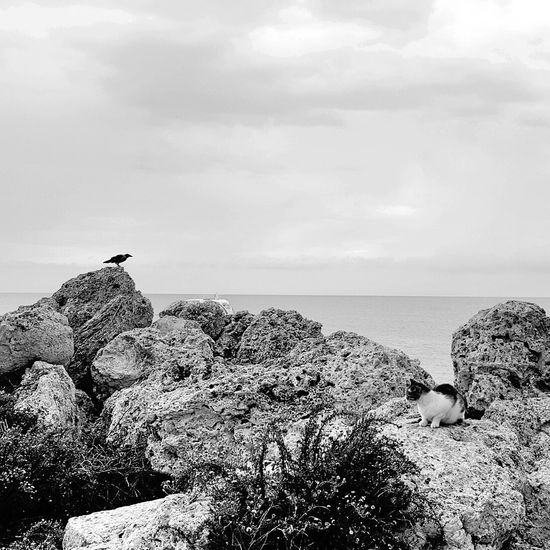 Horizon Over Water Tranquility Relaxation Hanging Out Taking Photos Blackandwhite Photography GREECE ♥♥ Rodos Greece Cat♡ Traveling