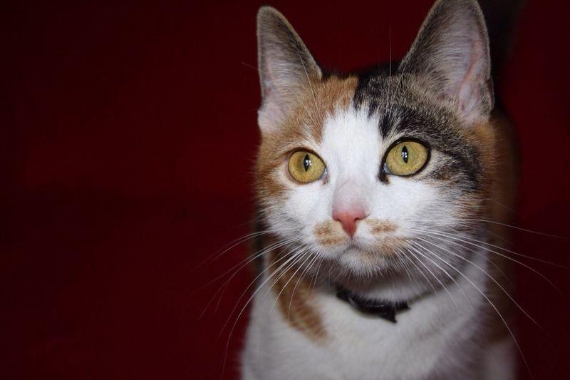 Animal Cat Eyes