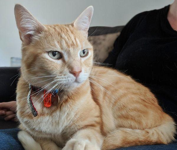 EyeEm Selects Pets Portrait Domestic Cat Feline Close-up Ginger Cat Whisker Cat Tabby Cat Tabby