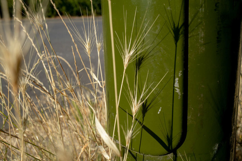 Green. Detail. Green Morning Morning Light Road Beauty In Nature Beauty In Nature Blade Of Grass Detail Dry Field Grass Green Color Growth Nature Outdoors Plant Shadow Shadows Sunlight Tranquility Urban Yellow