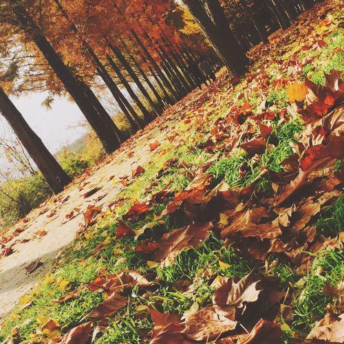 Fall Autumn Autumn Colors Autumn Leaves Colors Of Autumn Daegu Korea